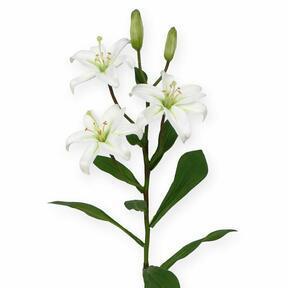 Künstlicher Zweig Lilie weiß 50 cm